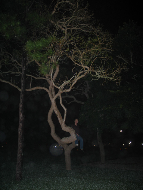 picture of Cam in tree