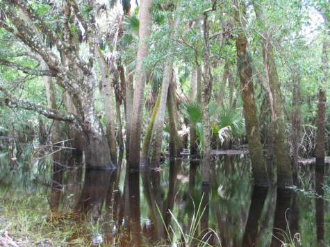 [picture: jul03myakka-watertrees.jpg]