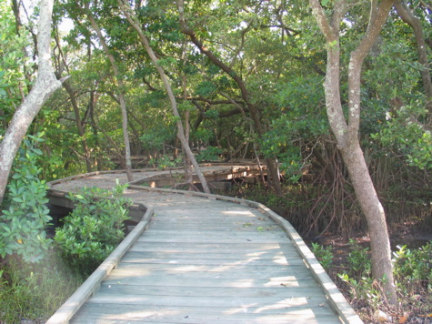 [picture: entrance to mangrove forest]